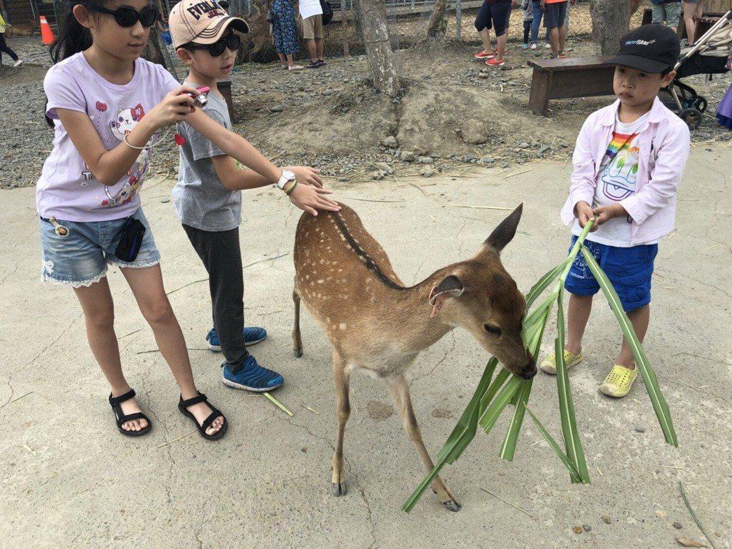 在「鹿境」摸鹿之前,進場遊客雙手都要消毒。 記者王慧瑛/攝影