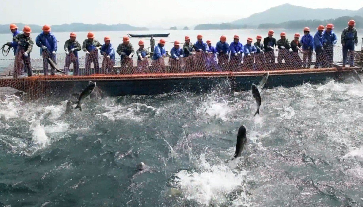 「巨網捕魚」已成為大陸浙江省千島湖生態旅遊觀光重點。擷自法新社影片