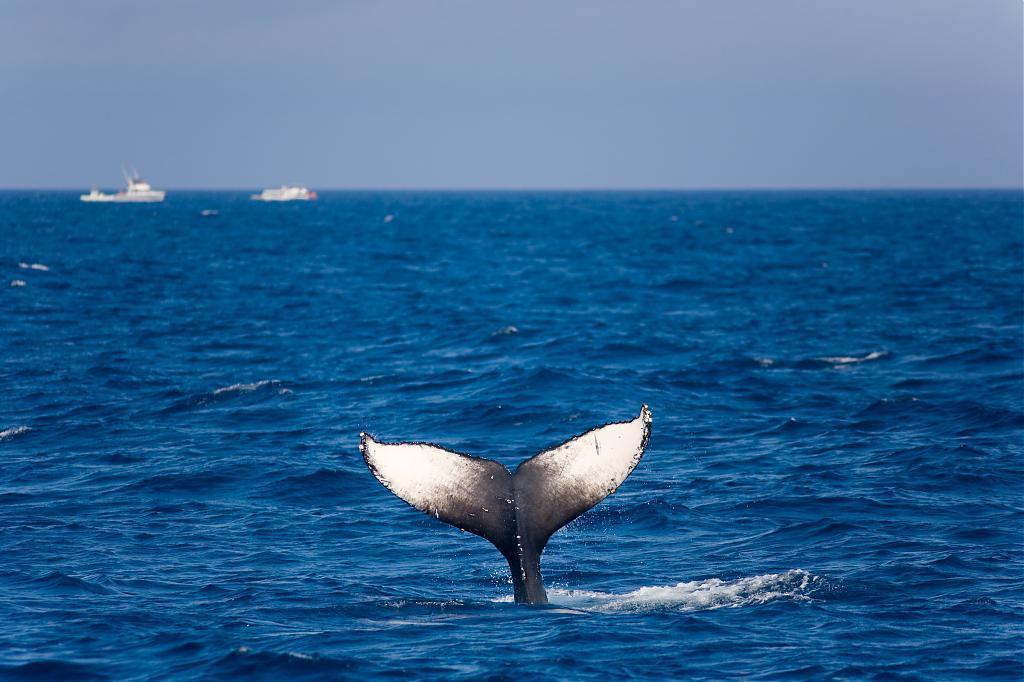 ▲沖繩賞鯨。(圖/Tripbaa趣吧!亞洲自由行專家)