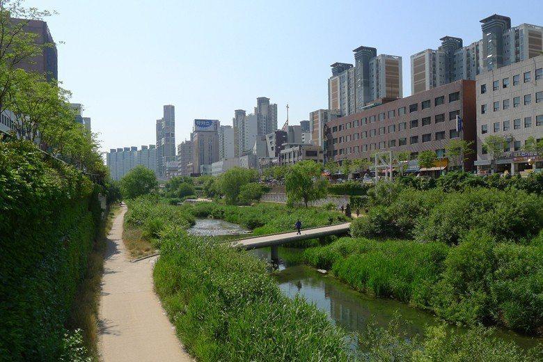 清溪川全長約13.7公里,越往下游就越綠越「軟」,硬鋪面越少。 圖/作者自攝