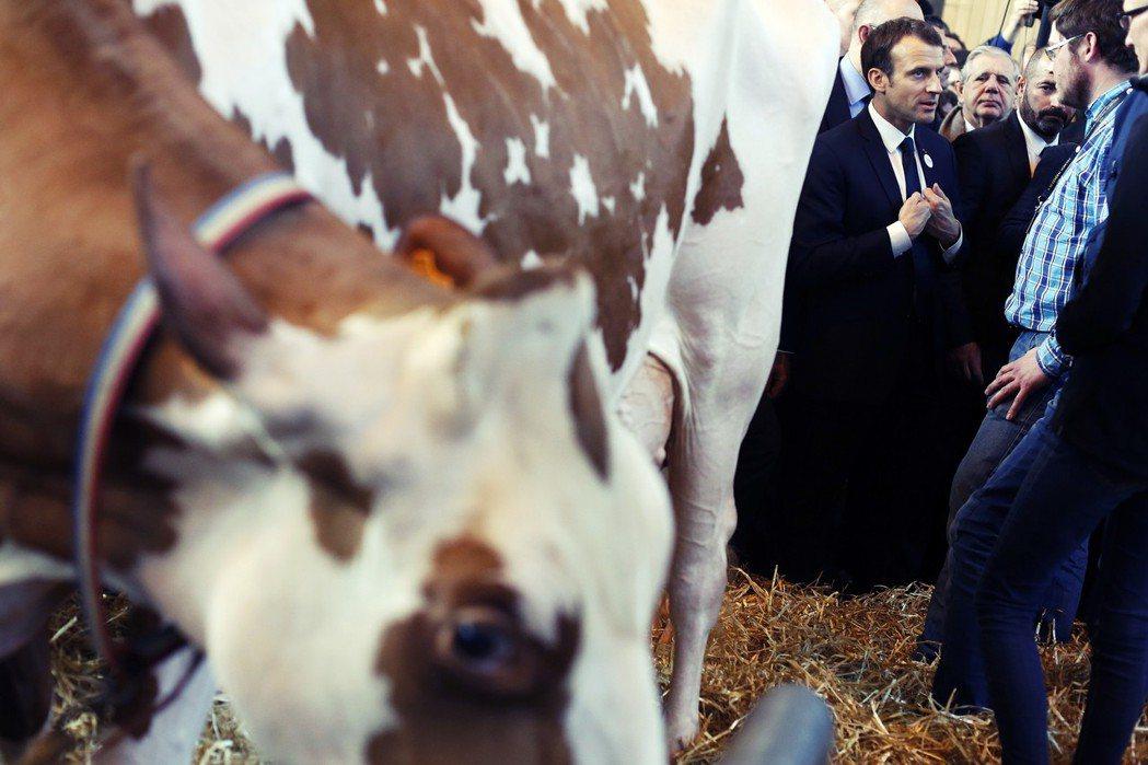 「馬克宏,還我牛!」 圖/美聯社
