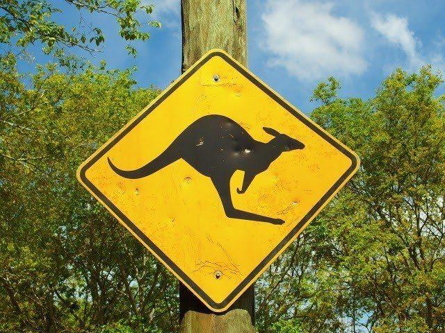 一直很想看到小心袋鼠的標誌,希望有機會能在野外看到。圖/背包客棧