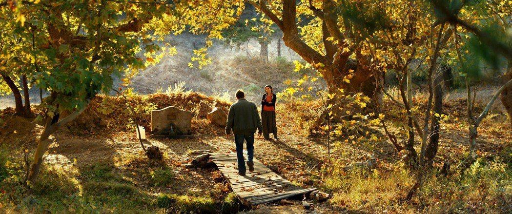 「野梨樹」將角逐本屆坎城影展最佳影片金棕櫚獎。圖/海鵬提供