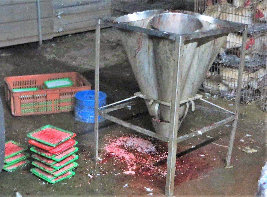 私宰場放血桶骯髒汙穢,業者表示要作米血糕。記者卜敏正/翻攝