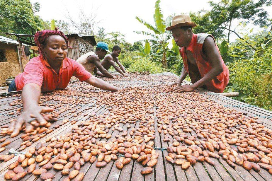 可可是迦納的主要產業之一。 (路透)