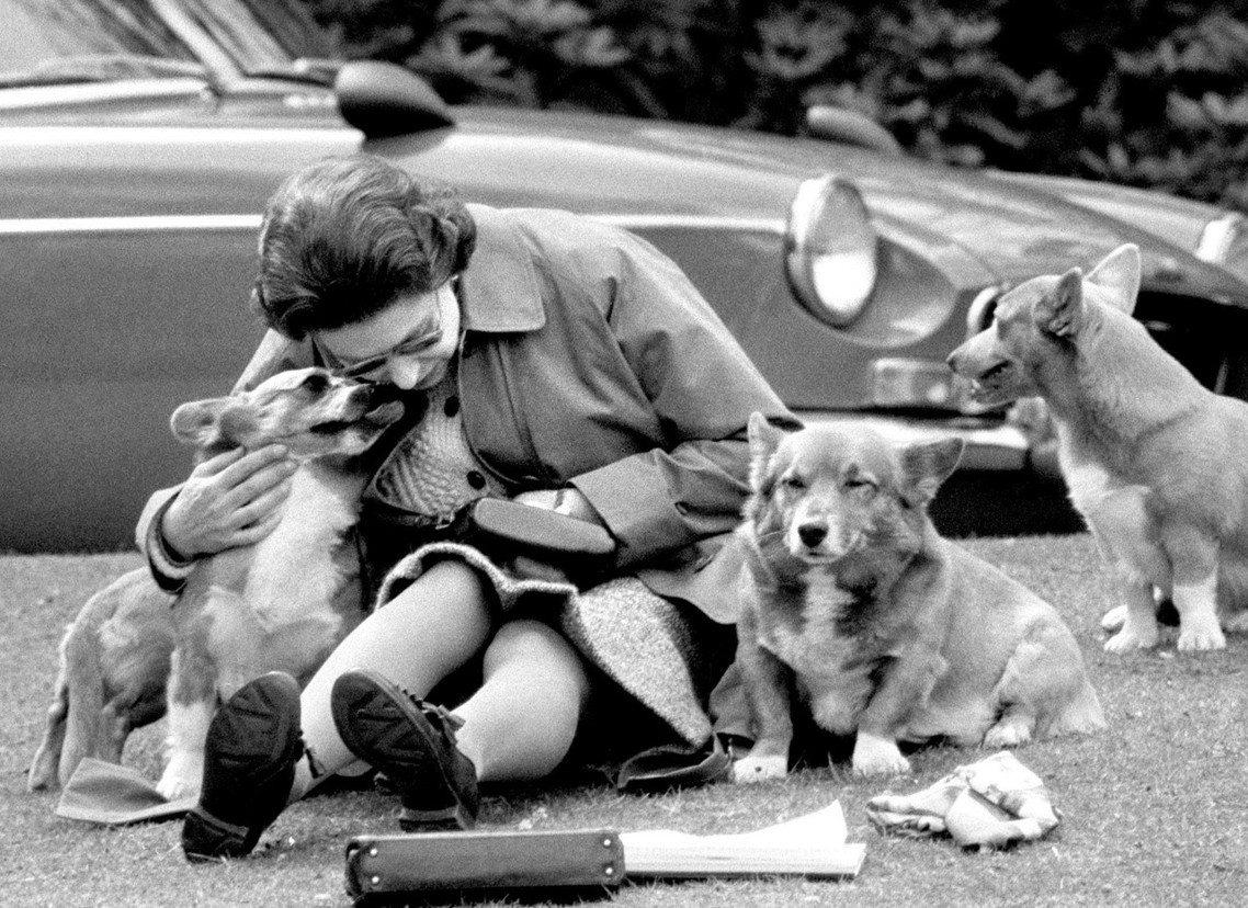 女王與狗。 圖/美聯社