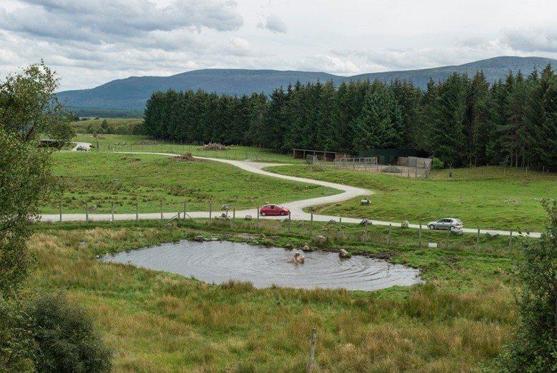 蘇格蘭的高地野生動物園(Highland Wildlife Park)夏天綠草如茵,北極熊生存其中令人感到衝突,但這樣的情感衝突不一定是正確的,這裡是羅晟文在歐洲走過的16間圈養白熊場所中,他自己評比為環境最好的一處。 圖/羅晟文攝