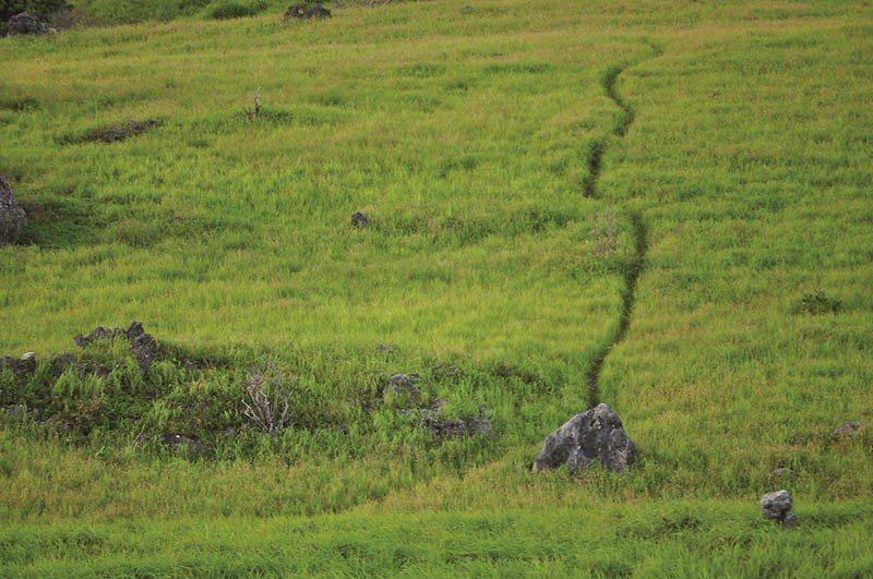 青青草原的小徑隨著草原地勢高低起伏、蜿蜒,讓人覺得走到路的盡頭或許會抵達藍天。