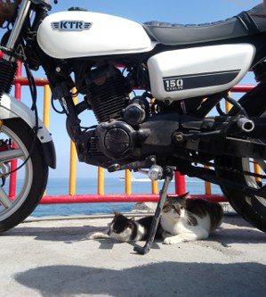 小琉球特產-貓咪&愛車。