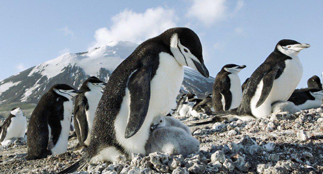 紀錄片「地球:奇蹟的一天」中可愛的南極企鵝。圖/甲上提供