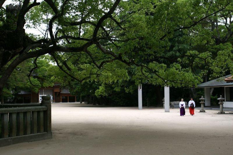 ▲樹齡2600年的樟樹,是神武天皇親手種植的,據說憋氣繞它3圈就能心想事成。 (...