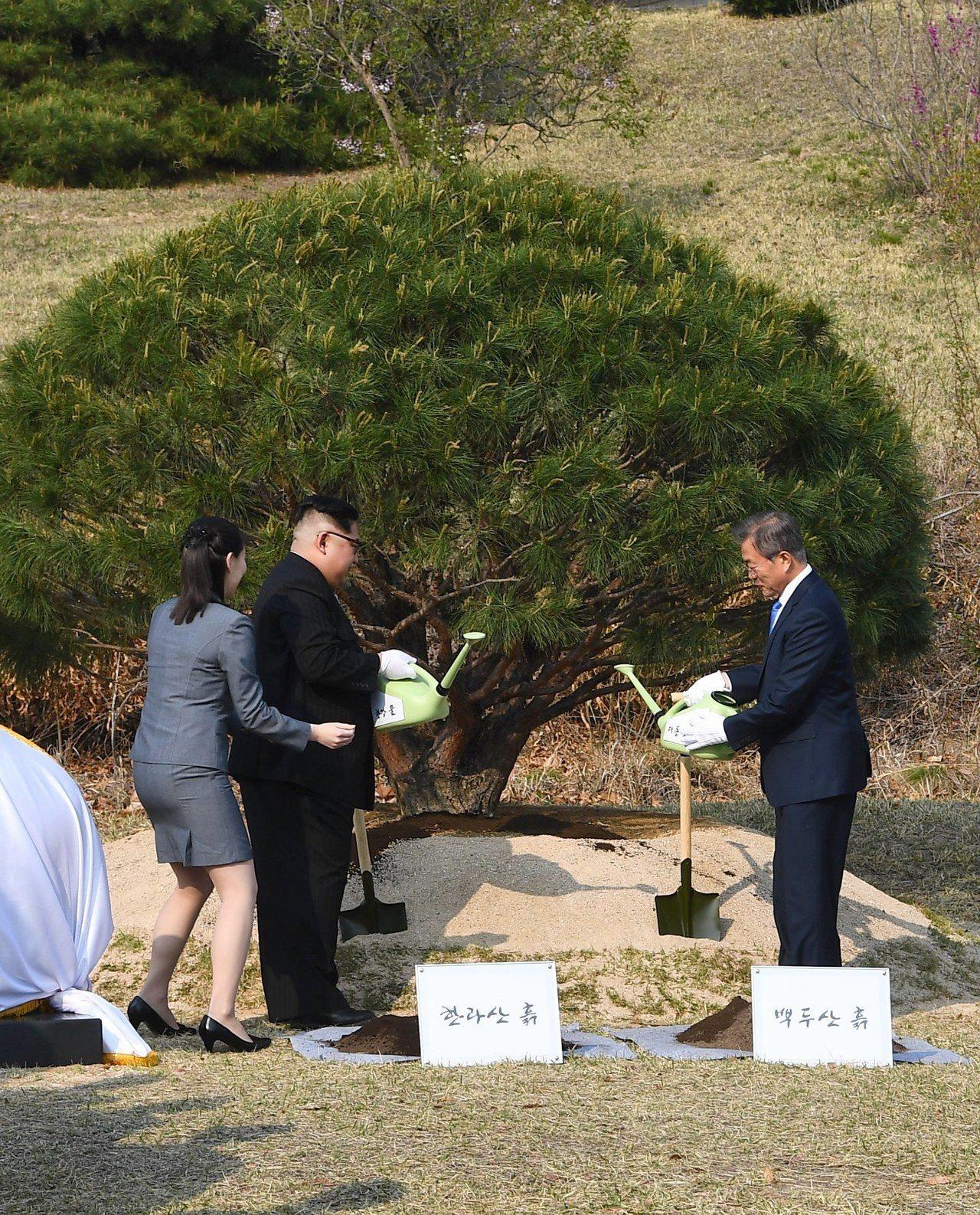 南北韓領袖文在寅和金正恩在午休之後,下午15:30展開預訂的植樹儀式。 歐新社