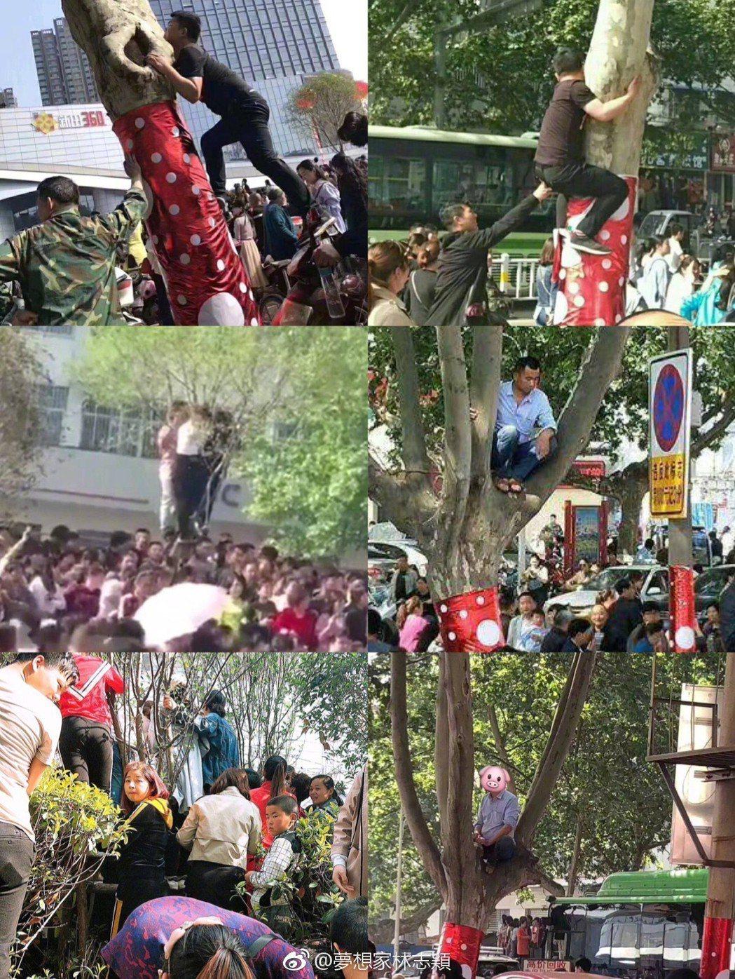 林志穎活動現場擠滿人潮,還有人爬上樹。 圖/擷自林志穎微博
