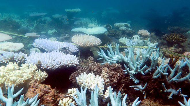 澳洲今天宣布,將撥5億澳幣(約新台幣112億468萬元)經費給大堡礁,以恢復當地...