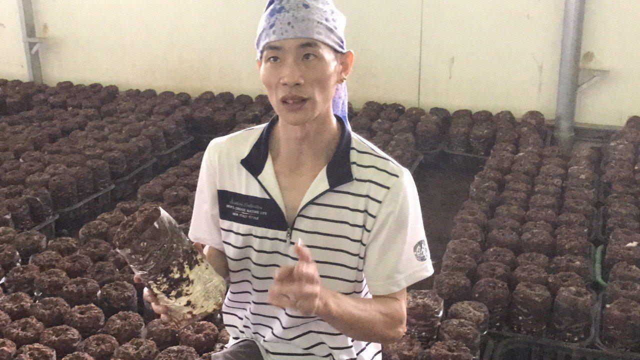 新社青年菇農呂建旭種有機菇、自有品牌,擺脫農民的傳統宿命。 記者陳秋雲/攝影