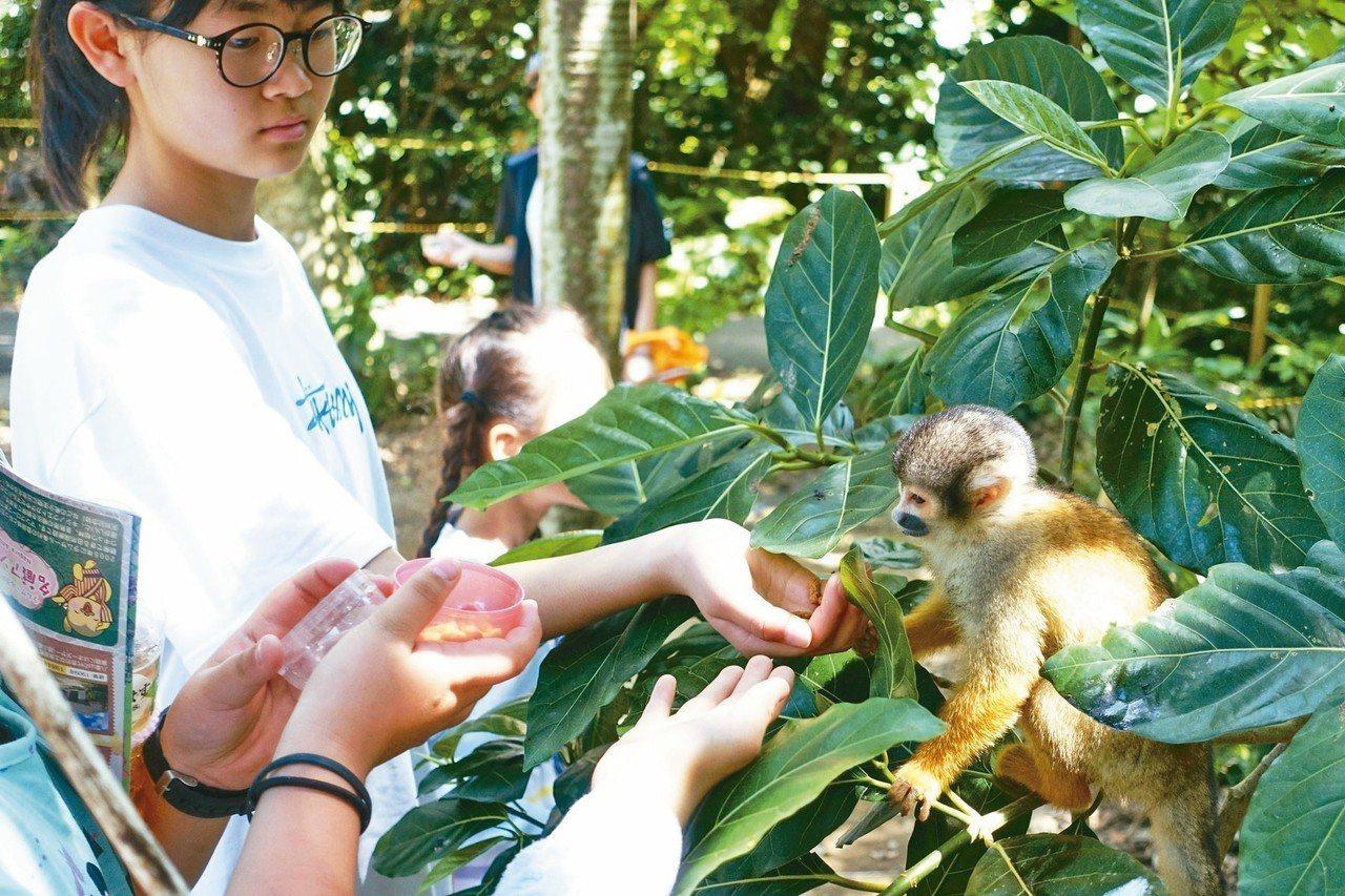 八重村中松鼠猴之森,猴子平易近人。 記者沈佩臻/攝影