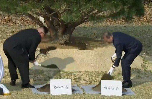 文金兩人在軍事分界線上共同種植松樹。 路透