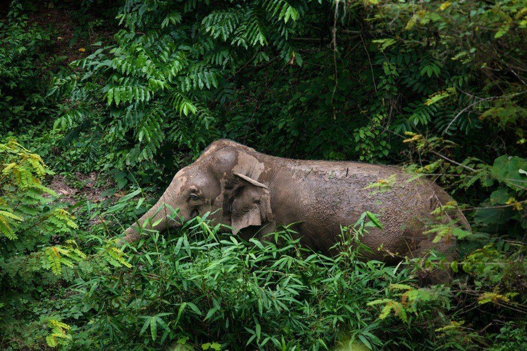崗卡章國家公園為泰國佔地面積最大的國家公園,自然生態豐富。家園成公園後,族人曾迫...