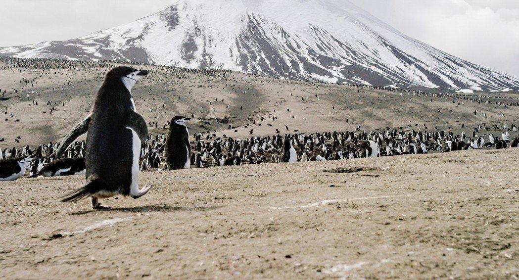 南極島企鵝。圖/甲上提供