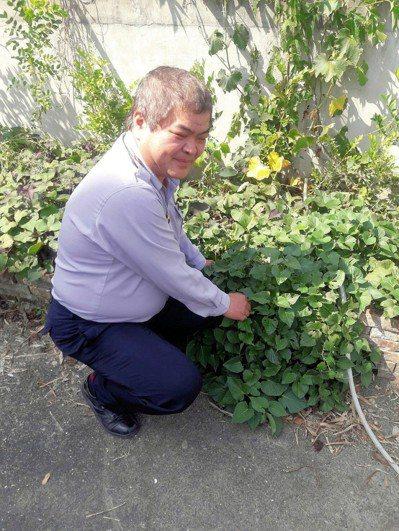 台南麻豆警分局偏僻的大丘分駐所,警員在分駐所外種地瓜葉不定期加菜。記者謝進盛/攝...