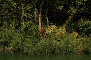 陳文琳/虎之輓歌:失語的中亞大地,與滅絕的圖蘭虎