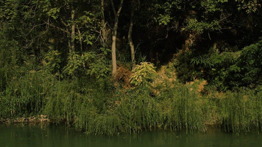 不安的槍聲在圖蘭虎所在的阿姆河不斷響起。逾半世紀之久的獵殺,終致圖蘭虎所剩無幾。...