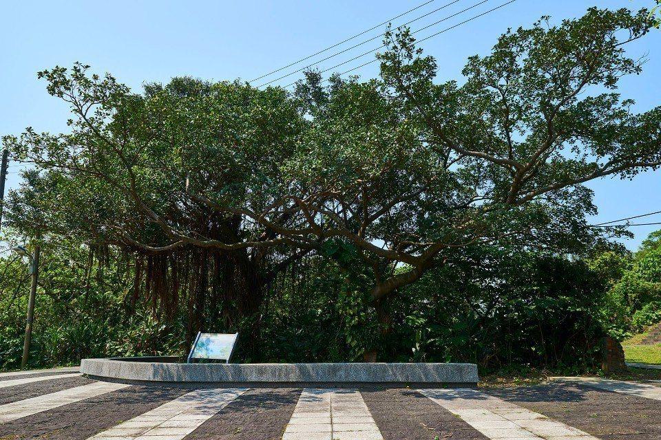 欣賞鳥鳴重奏的大榕樹。(攝影/蘇品麟)