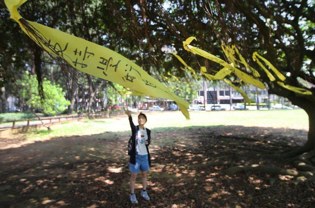 中央大學管理學院前的太極中大樹上繫著黃絲帶,路過的同學觀看師長與同學們訴求。 圖...