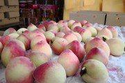每天3顆水蜜桃 竟然能抑制腫瘤發展