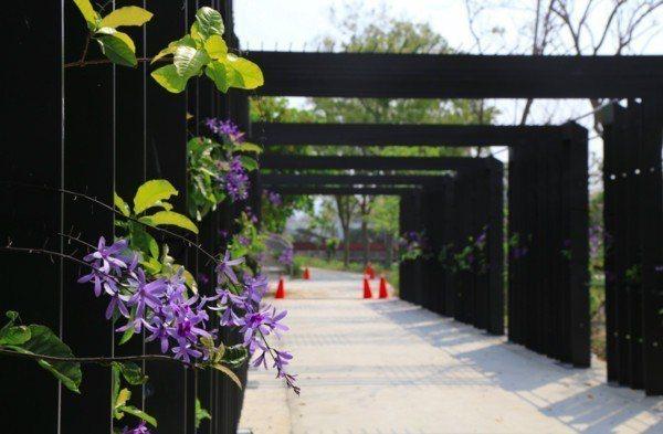 30公尺的紫色藤蔓隧道。圖/翻攝自台中市政府官網