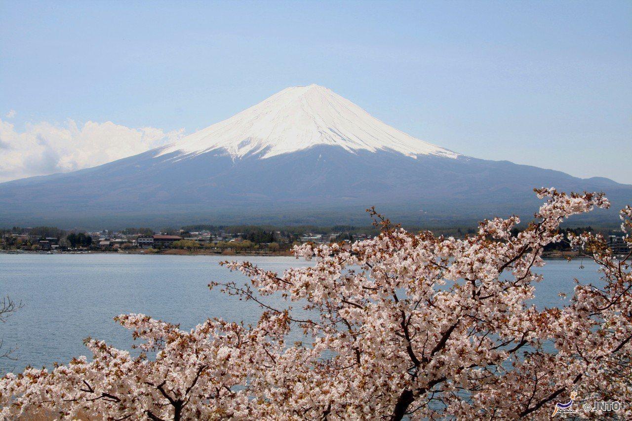 ▲富士山櫻花。(圖/©Akira Okada/©JNTO)
