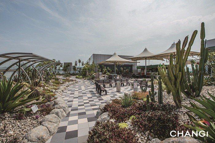樟宜機場第一航廈仙人掌花園。