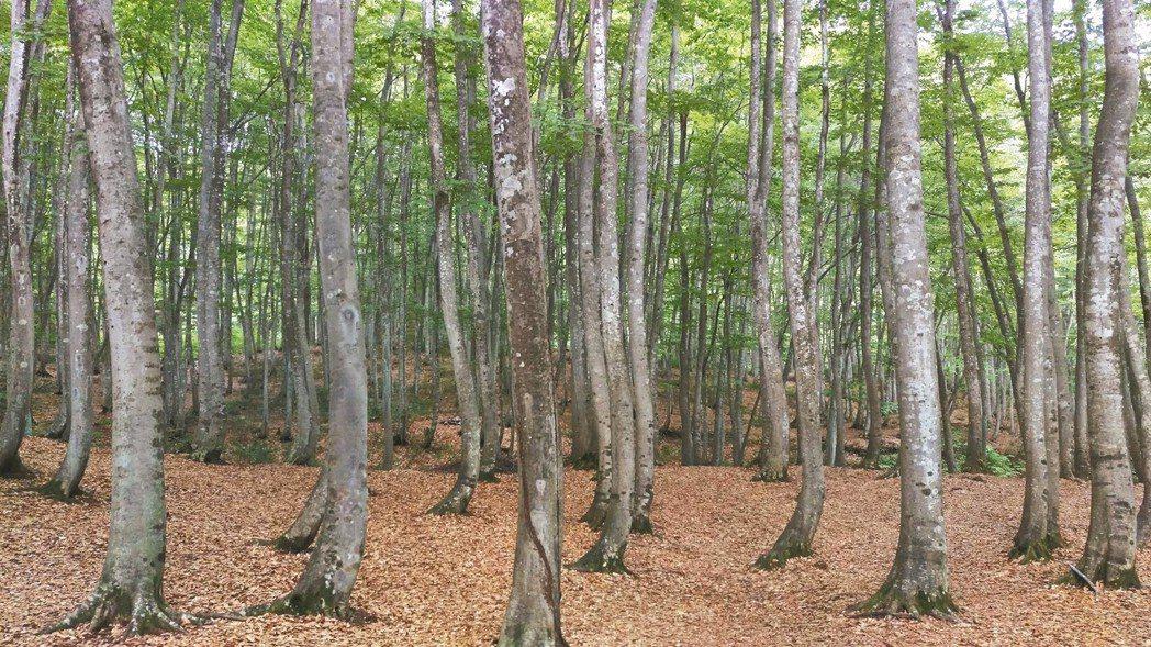 除了多項藝術品,新瀉當地自然景觀的「美人林」也很有看頭。 圖/有行旅提供