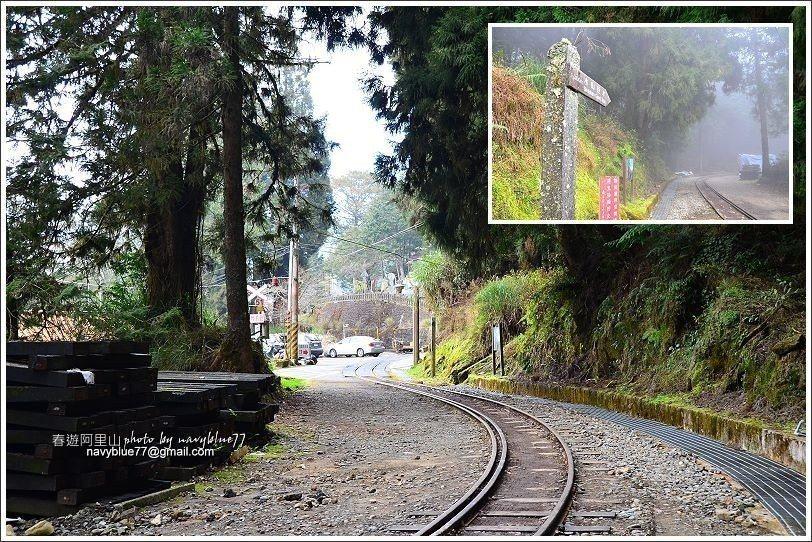↑水山線鐵道入口在阿里山派出所對面。