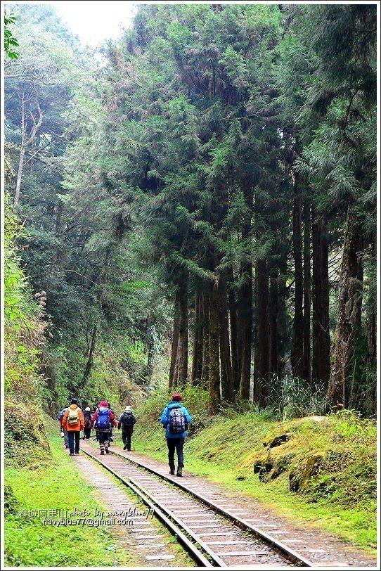 ↑水山线铁道十分平缓,几乎没有坡度,枕木间林务局还贴心的舖上木屑,走起来很舒服。