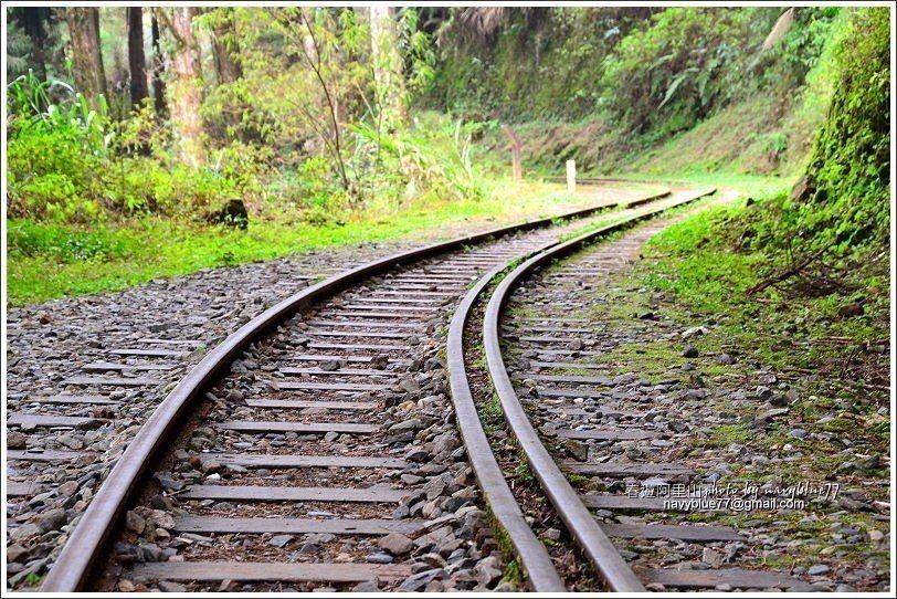↑水山線鐵道十分平緩,幾乎沒有坡度,枕木間林務局還貼心的舖上木屑,走起來很舒服。