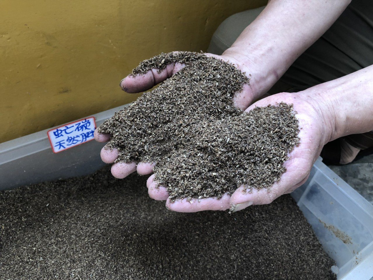 黑水虻消化廚餘後產生的糞便可做為天然肥料,施肥在校園植物,可讓植物生命力更旺盛。...