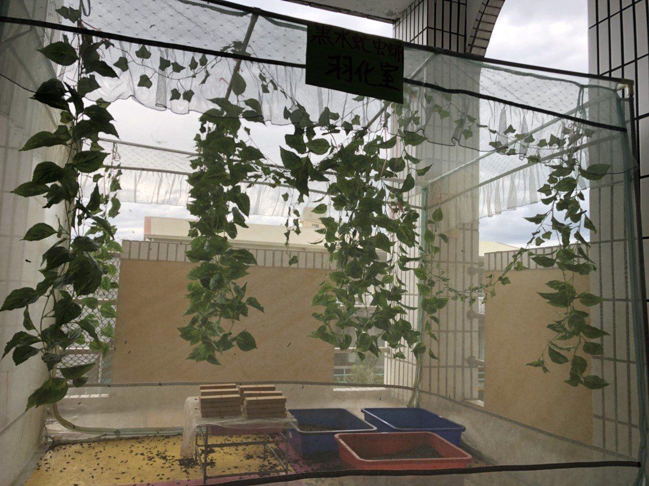 師生在校園一隅搭建黑水虻的羽化室。記者王慧瑛/攝影