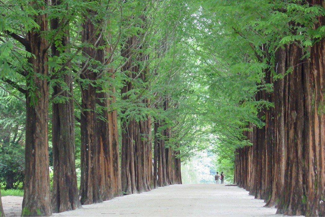 江原道 南怡島 圖片提供/韓國觀光公社
