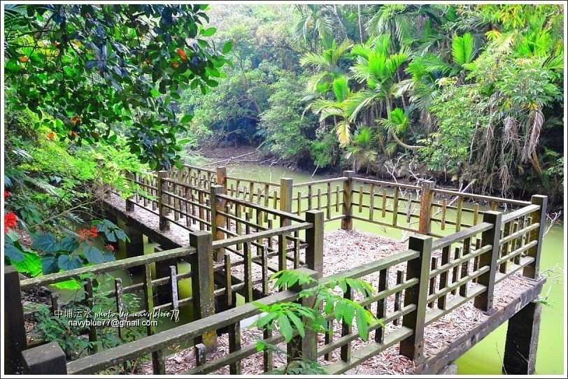 ↑埤西觀景平台也籠罩在綠意中。