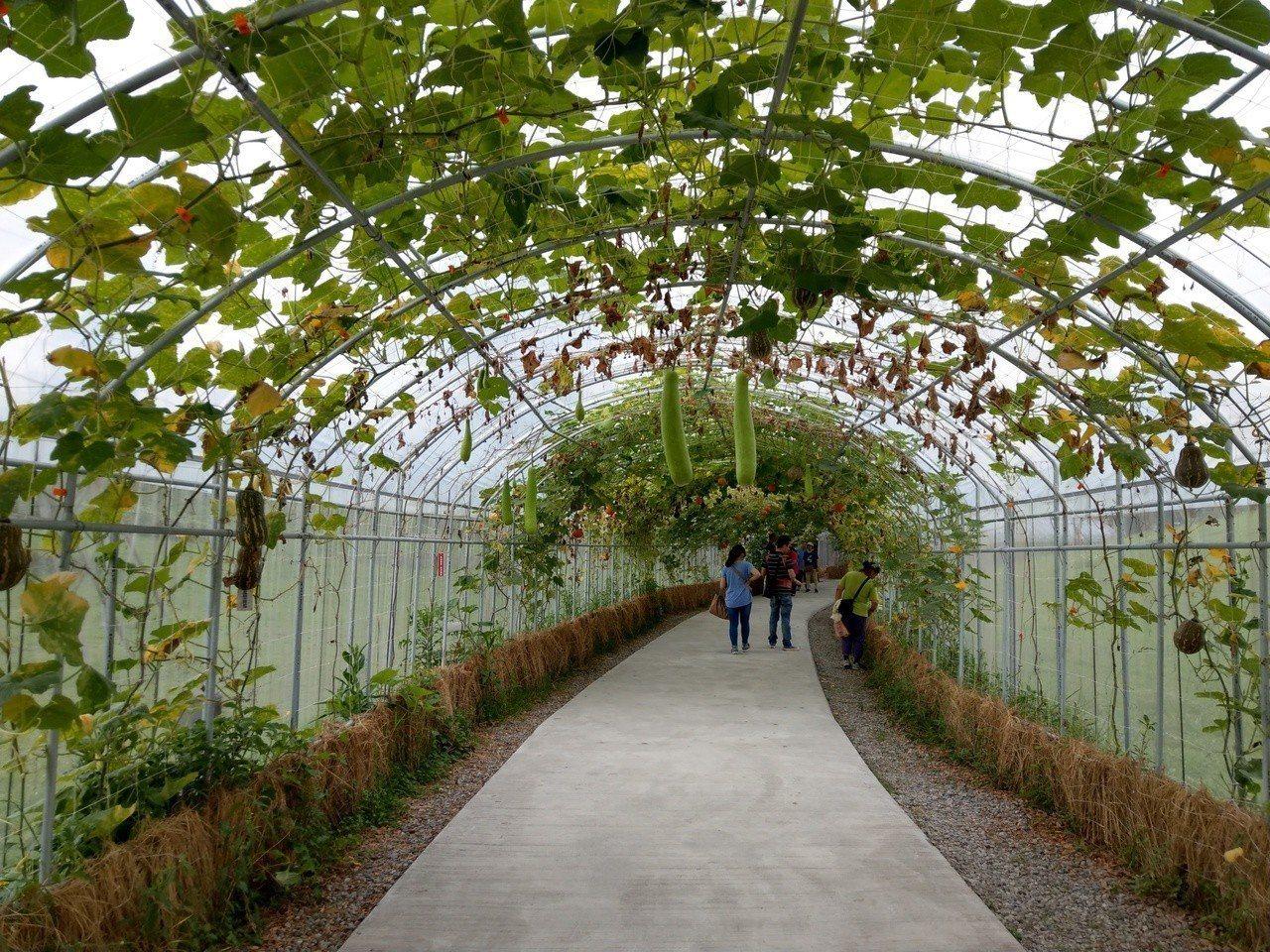 宜蘭綠博剩下最後幾天將結束,園區的瓜瓜隧道長滿各式瓜果迎賓。記者戴永華/攝影