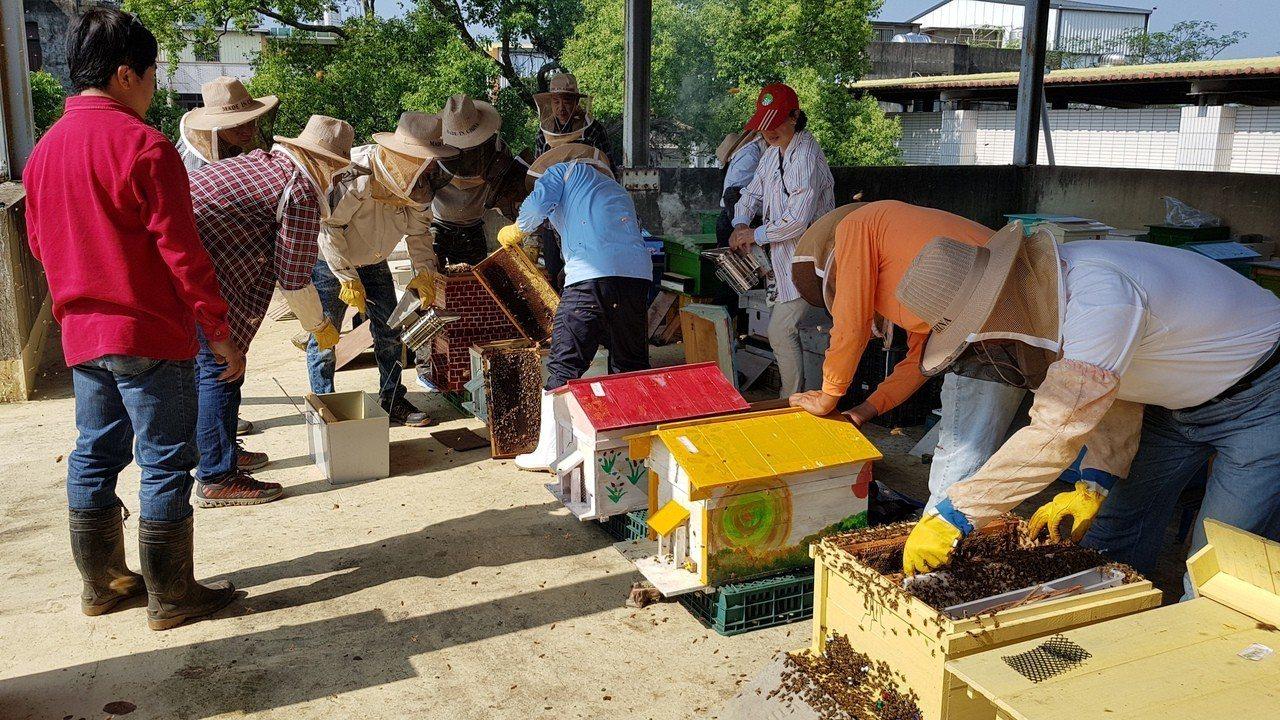頭屋鄉明德社區養蜂班志工取巢脾準備搖蜜收成。記者黃瑞典/攝影