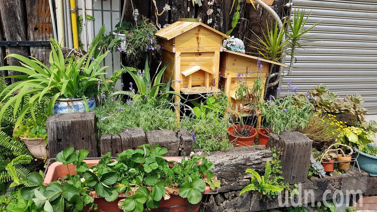 頭屋鄉明德社區部分居民在屋前擺放蜂箱,形塑社區特色。記者黃瑞典/攝影