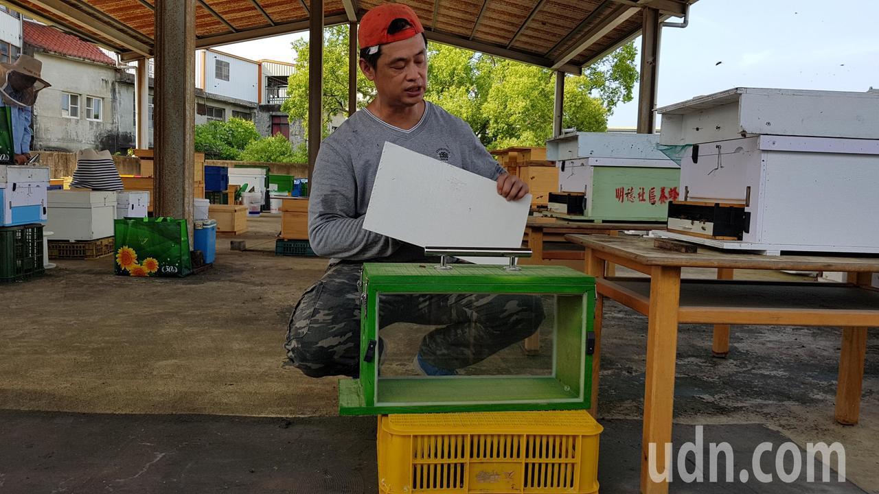 謝文達打造透明蜂箱,將深入校園生態教學,讓學生了解蜜蜂生態。記者黃瑞典/攝影