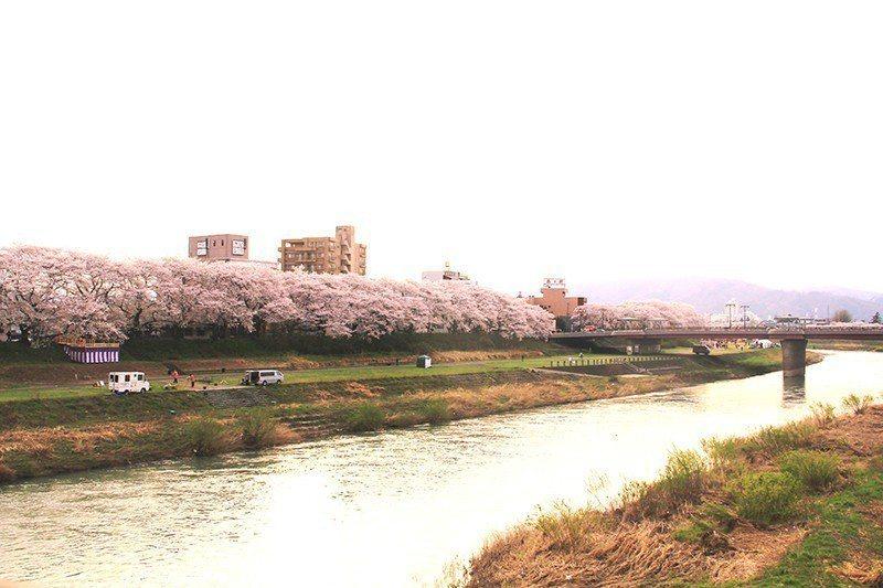 川畔壯麗的櫻花隧道。
