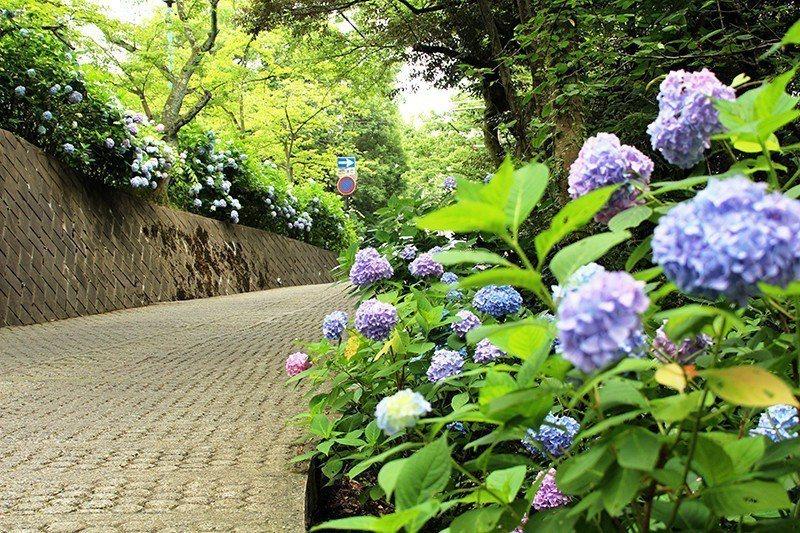 夏季一到,深淺不一的藍、紫色花團錦簇。