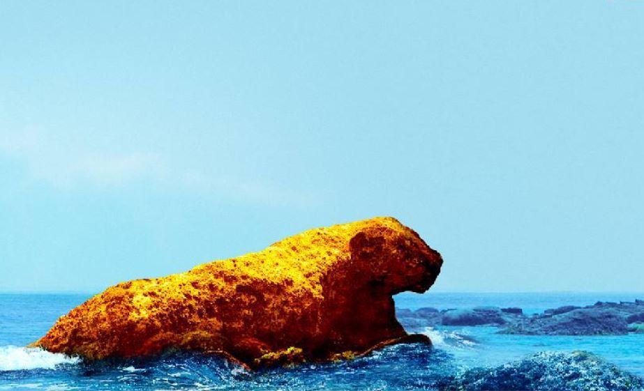 阿拉寶灣退潮時才會出現的「花豹」。圖/和平島公園提供