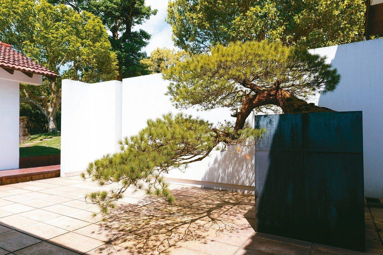 陳泰銘的生活品味延伸到一草一木。五葉松盆景就立在入門處。 攝影/陳立凱