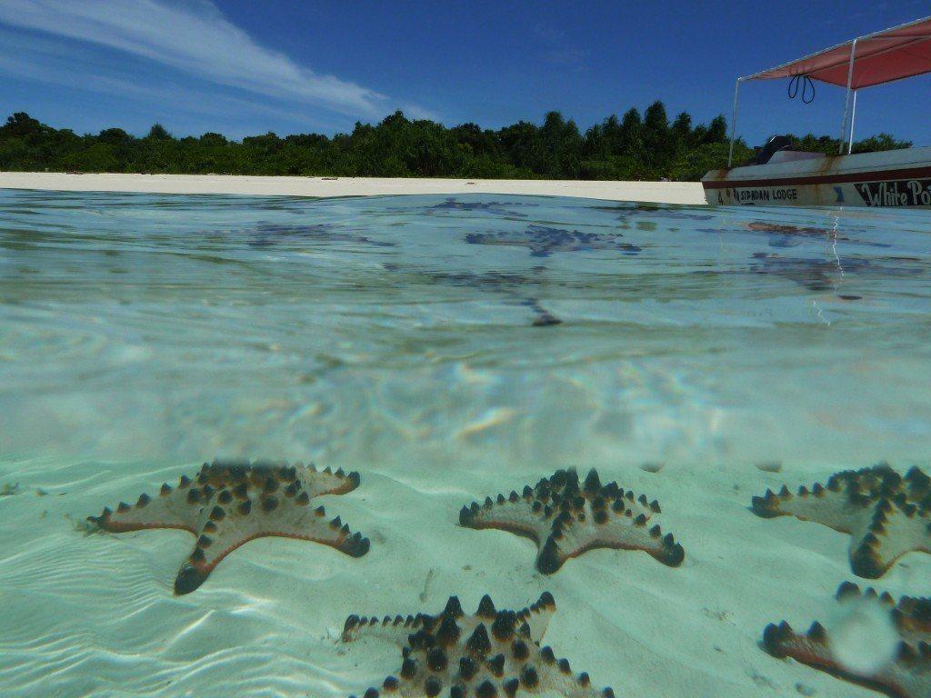 海星島(Starfish Island) pinterest.co.uk