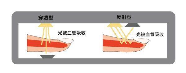 光的一部分被血管吸收。(繪圖/林彥伶)